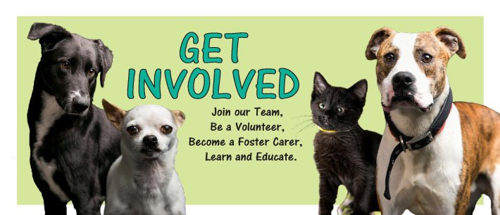 Get Involved: Join our team, volunteeer, foster, learn and educate